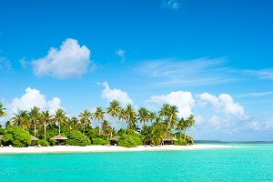 Tropical island beach with palm tree