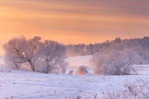 Frosty trees in morning sunlight