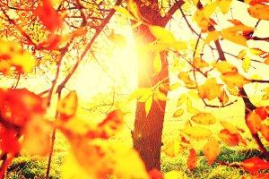 Colorful foliage close-up