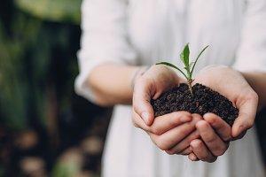 Woman holding seedling