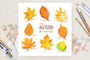 Set with watercolor autumn leaves