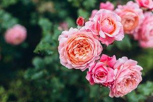 Tender floral background