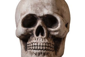 Isolated skull against white background