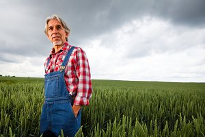 Farmer Walking Through Cereal Field
