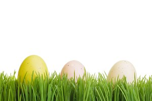 Green grass with eggs isolated