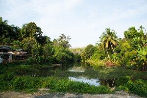 village in the jungle.