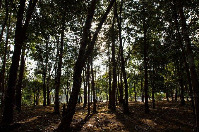 IMG_2432.jpg - Nature