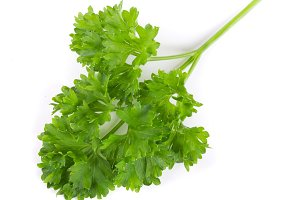 Curly parsley isolated on a white background