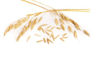 oat spike isolated on white background