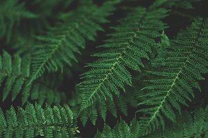 Lush Green Fern Closeup