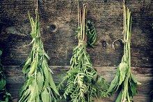 Healing herbs, herbal medicine.