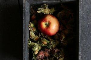 Food. Apple, nuts and plums on vintage table