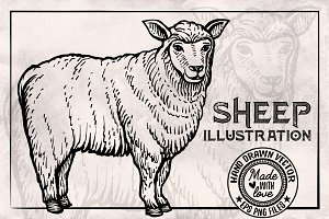 Sheep Vintage Illustration
