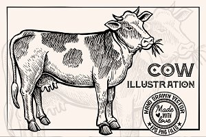 Cow Vintage Illustration