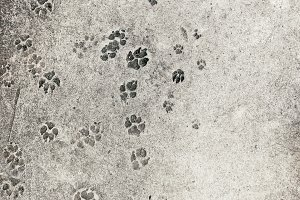 Dogs and cars as pet puppy mammals footsteps on concrete ground for background - with copy space
