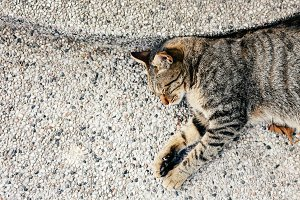 Top view of napping adorable cat sleeping on outdoor ground - with copy space