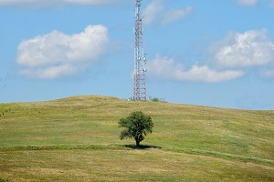 The tree and the antenna