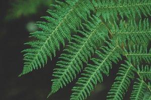 Forest Fern Closeup
