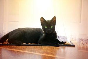 Cute young black cat.