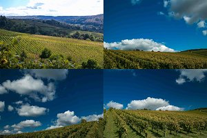 Autumn in the Vineyard Bundle Vol. 1