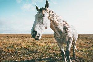 White Horse Animal pasture