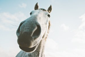 White horse portrait selfie funny