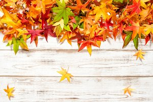 Autumn banner Colorful leaves