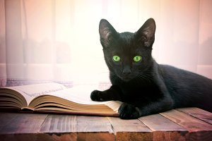 Open book and black cat.