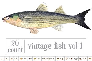 Vintage Fish Graphics Bundle