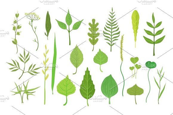 Fresh Green Leaves From Trees Shrubs And Grass Set For Label Design Nature And Ecology Cartoon Detailed Colorful Illustration