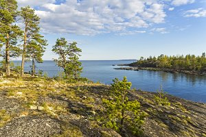Pines on the shore of Ladoga Lake