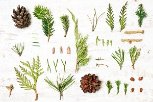 background of spruce, cones