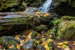 Autumn at Trillium Falls