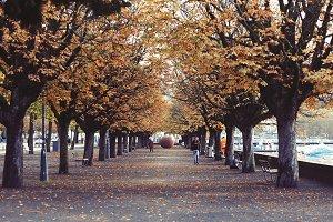 Park with Bright Orange Autumn Leave