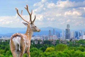 Deer with the city on the background