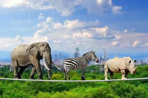 Elephant, zebra, rhino with the city
