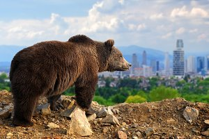 Bear with the city on the background