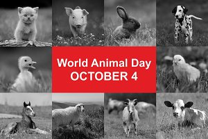 4th October. World animal day