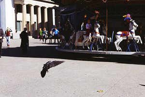 Pigeon At A Carousel