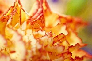 Macro Flower Petals Orange Yellow