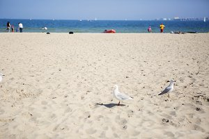 Melbourne Beach Scene With Seagulls