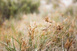 Close Up Grass Seeds