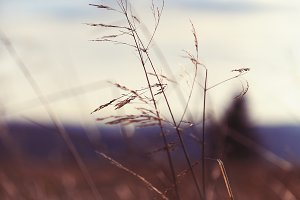 Grass Seeds In The Wind
