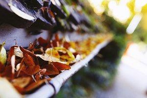 Orange Autumn Leaves In Gutter