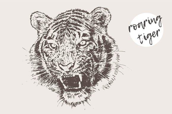 Illustration of a roaring tiger in Illustrations