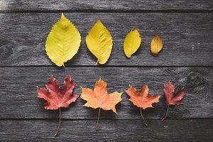 Fallen leaves on wooden background