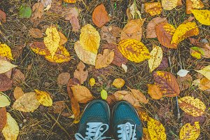 Sneakers on fall leaves