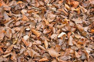 Tree leaves dry