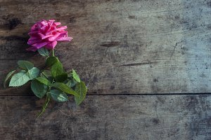 Rose on rough wooden desk