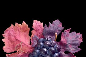 Grapes Still Life